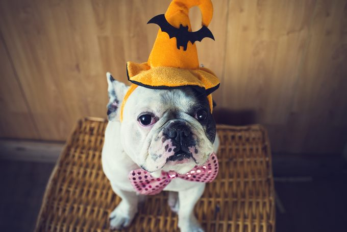 Halloween tips for pets