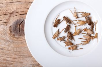 crickets on a plate