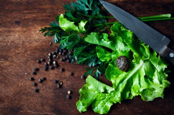 green cooking eco-friendly knife salad