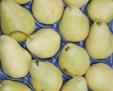 Pears and antioxidants