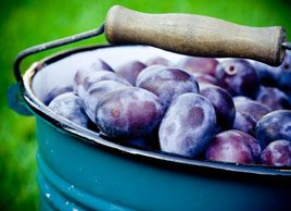 7 healthy ways to eat plums