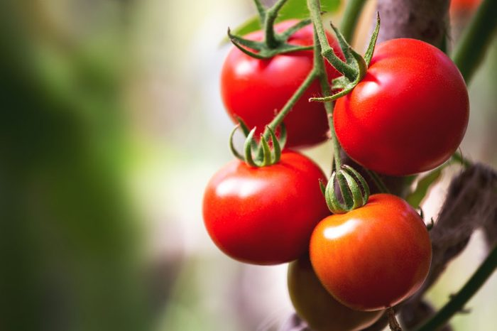 cancer-fighting-tomatoes