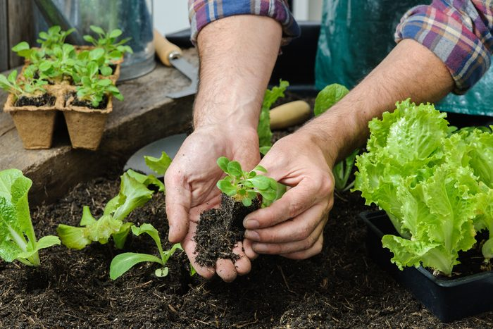 man-gardening