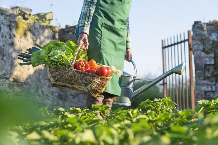 gardener-growing-veggies