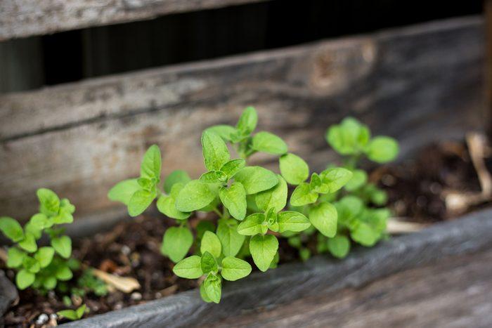 gardening-planter