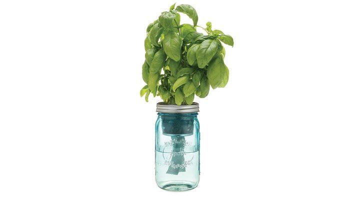 summer shopping, Indigo self watering herb jar