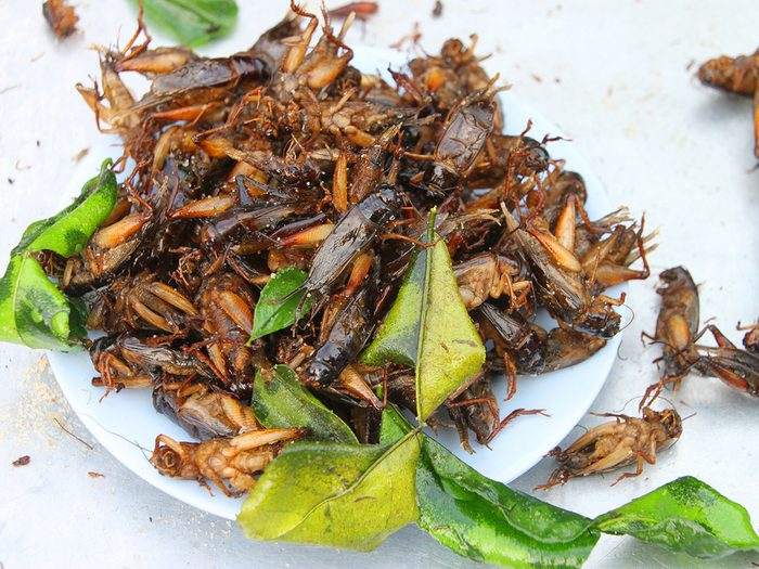 Health trends, pile of fried crickets