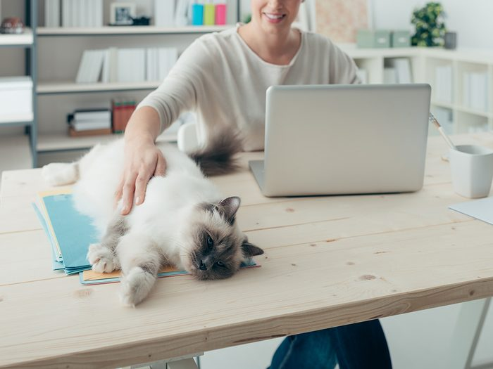 Eczema, woman petting her cat on her desk