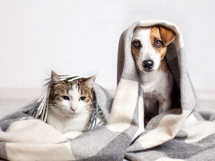 indoor air pollution air quality pets