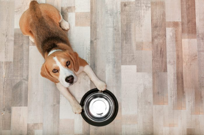 diet for dogs