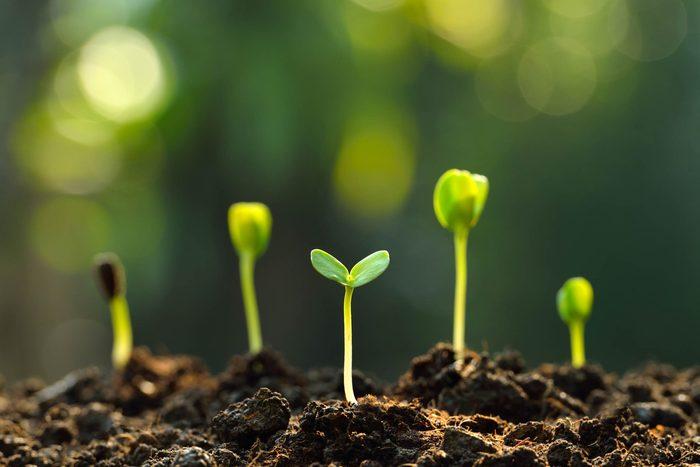 health benefits of gardening
