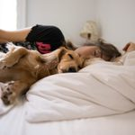 Should Your Dog Be Sleeping in Your Bed?