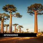 Baobab: How One Trendy New Ingredient Fights Dry Hair