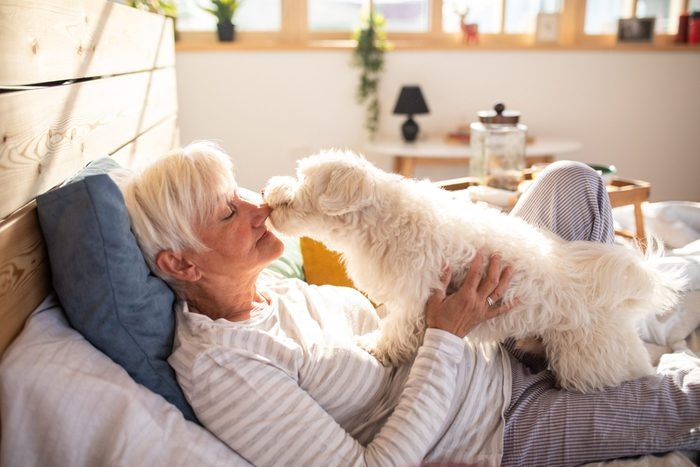 hypoallergenic dogs   Life Is Better With A Pet